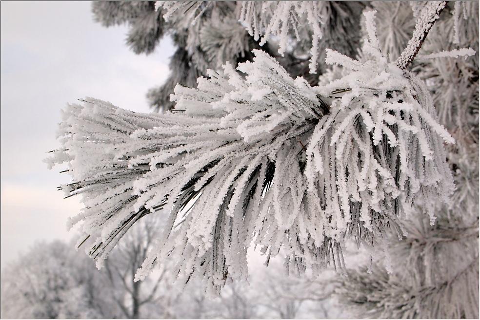 Hardinger Winterbilder: Große Weihnachtsvorstellung 2