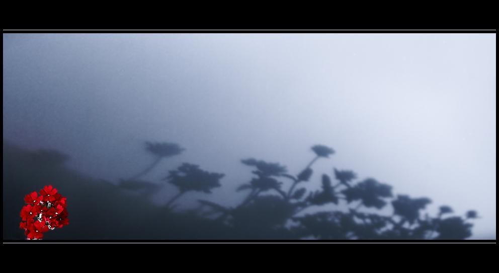 """[hardy plant] - go create """"shadows"""""""