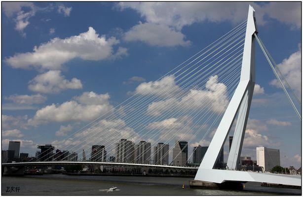 Harfe in Rotterdam