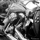 Harley b/w