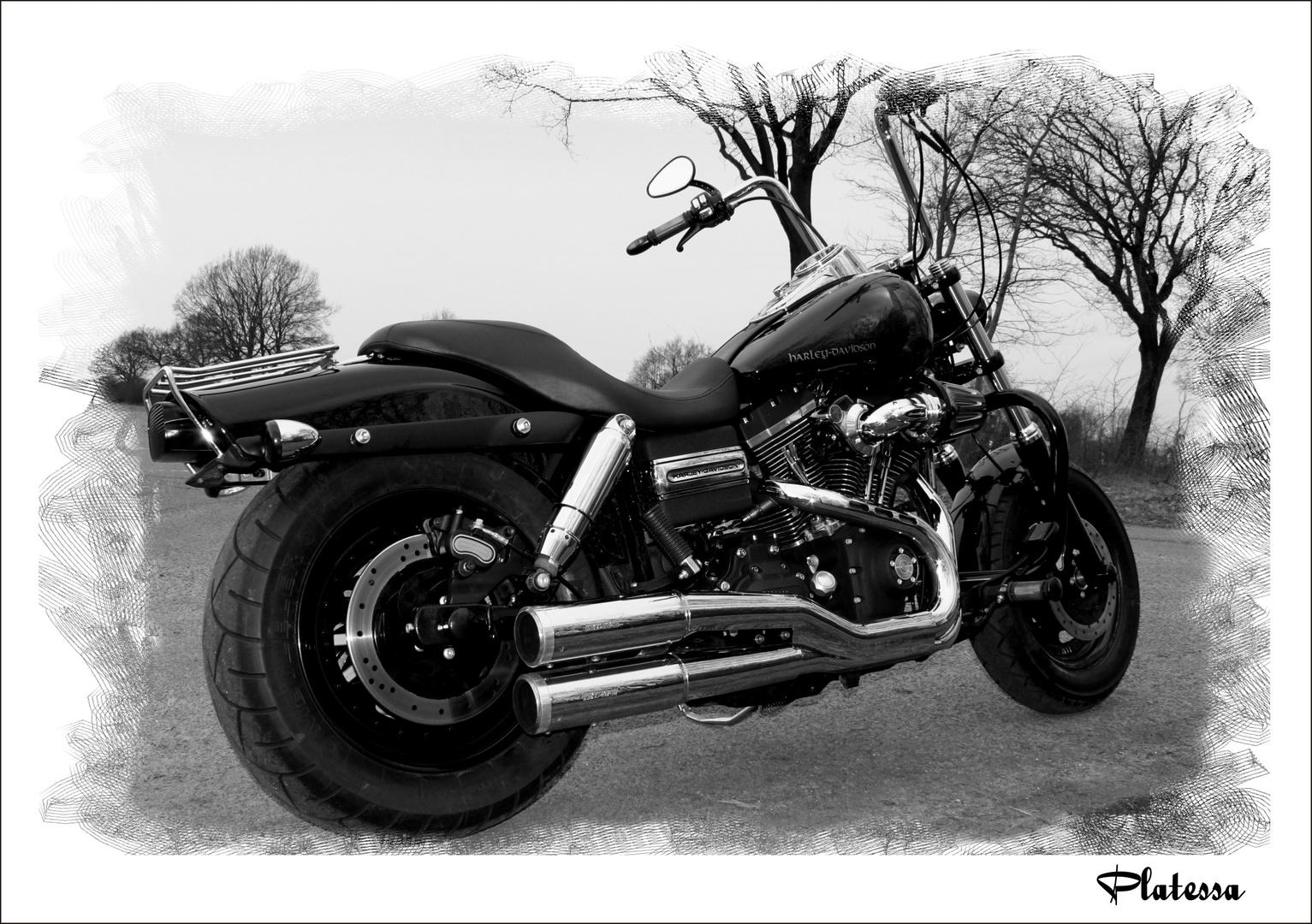 Harley Davidson /Fat Bob