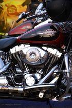 Harley...1