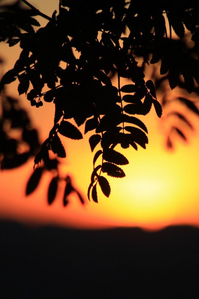 Harmonie der Sonne