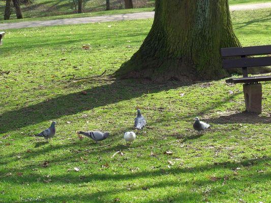 Harmonie im Park