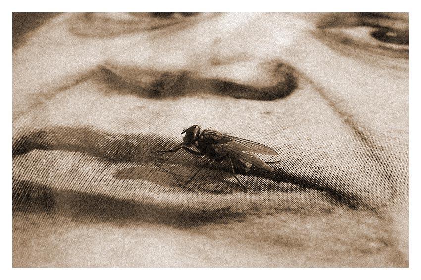 Harold Blooms Fliege