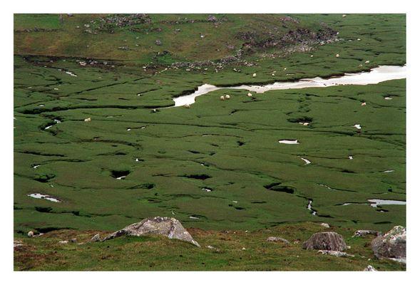 Harris Pasture