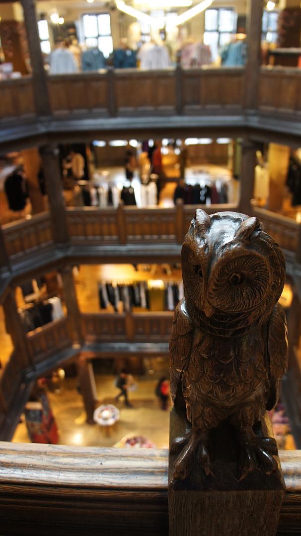 Harry Potter owls in London