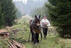 Harte Arbeit im Wald