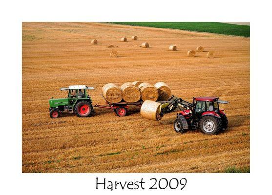 Harvest 2009 (2)