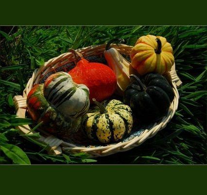Harvest 2012 ...