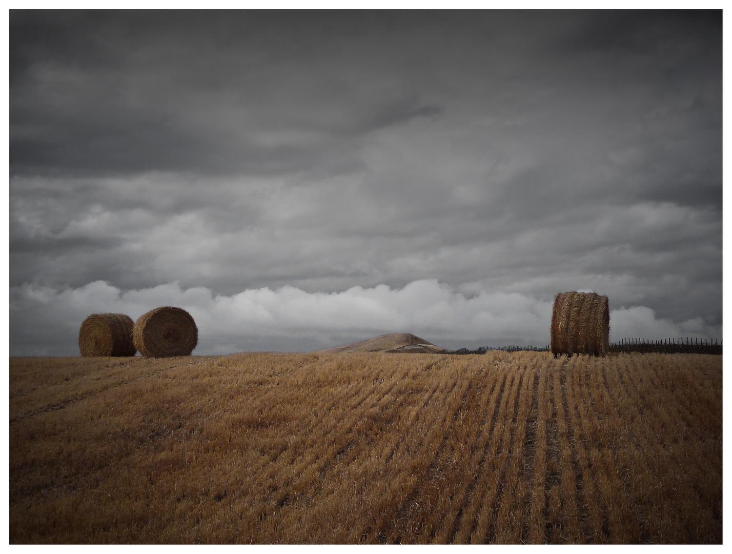 harvest_NZ_2010