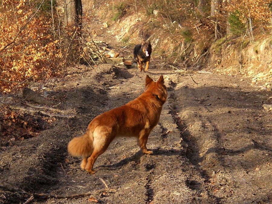 Harzer Füchse auf Spurensuche