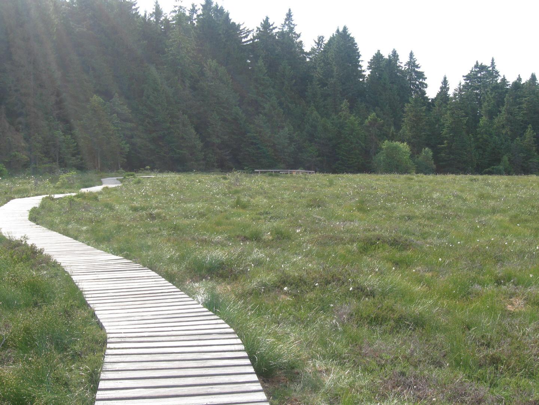 Harzer Moor
