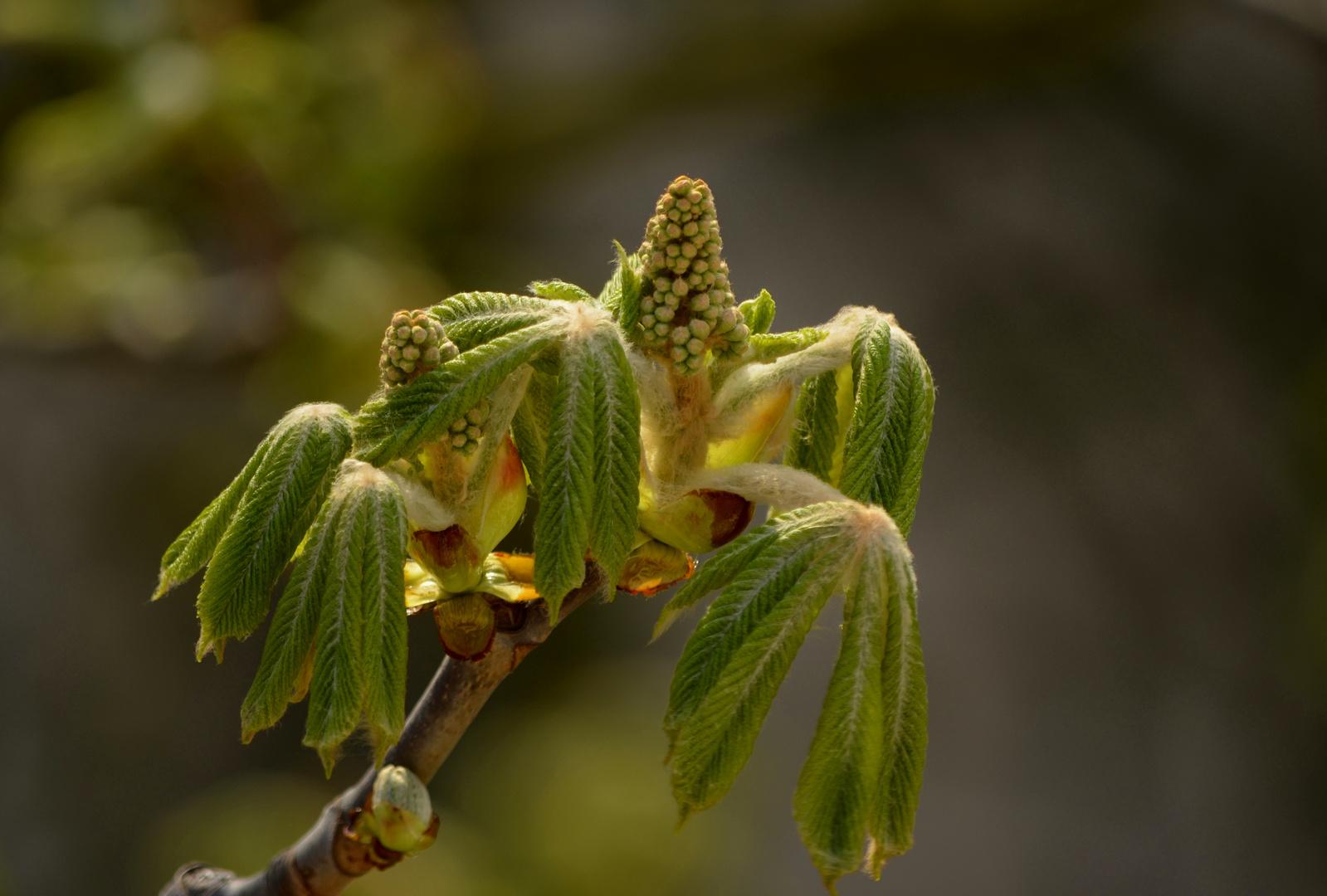 Hasch mich,ich bin der Frühling....