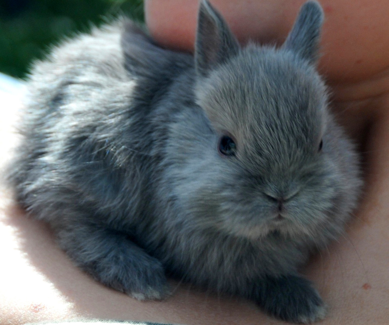 Hase Baby Zierhase