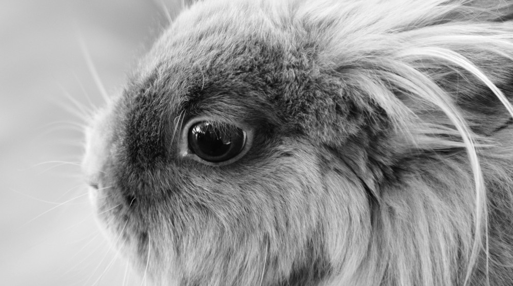 hase in schwarz wei foto bild tiere haustiere nagetiere kaninchen bilder auf fotocommunity. Black Bedroom Furniture Sets. Home Design Ideas