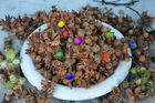 Haselnüsse für die Eichhörnchen - Bad Bevensen - Deutschland