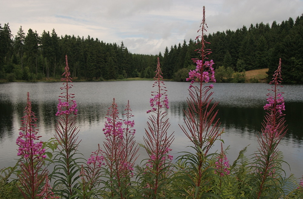 Hasenbacher Teich