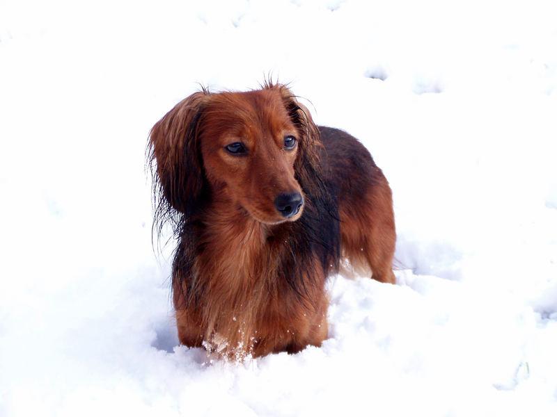 Hasko im Schnee