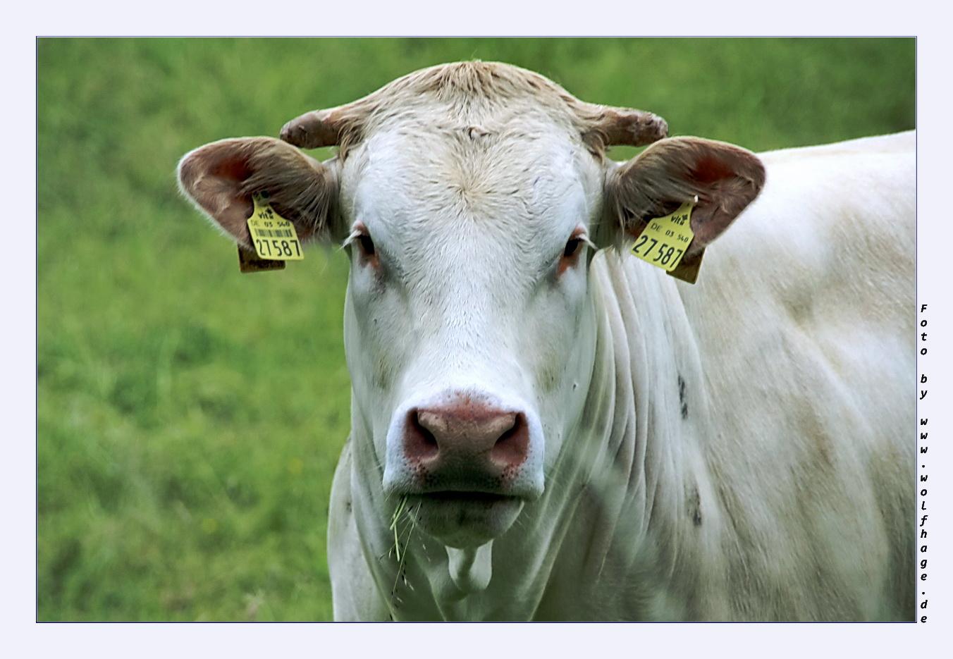 Hast du grad gesagt - ich gucke, wie eine dumme Kuh ???