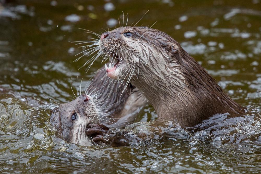 Hast DU meinen Fisch gegessen?!