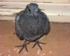 Hat da eben jemand hässlicher Vogel gesagt ?