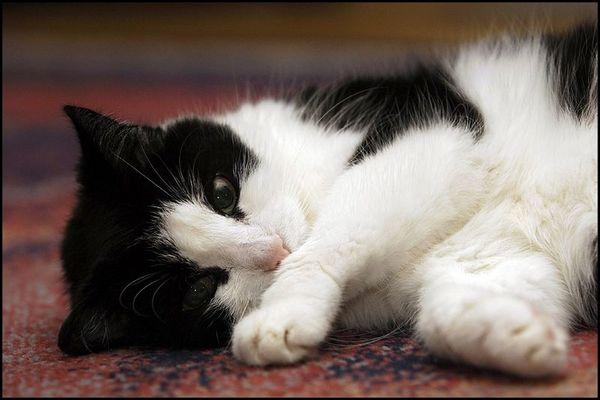 Hat da jemand unterm Teppich geklopft?