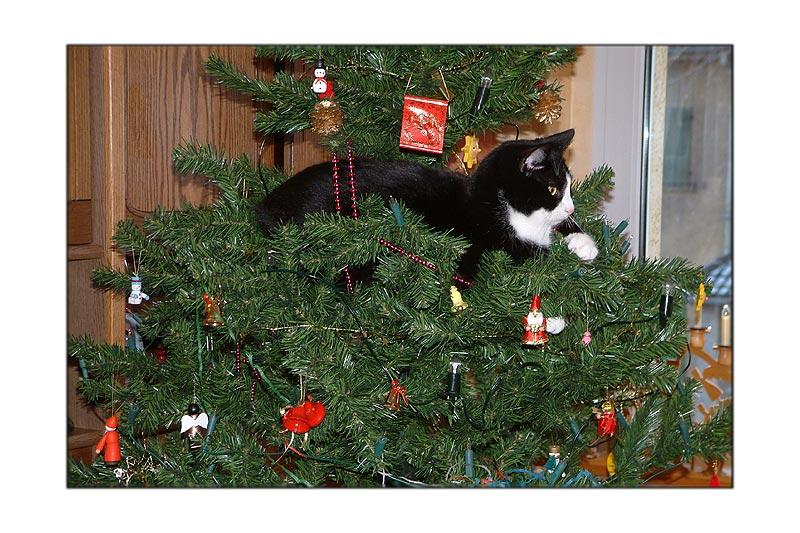 Hatte Ihr auch einen Kater im Weihnachtsbaum?