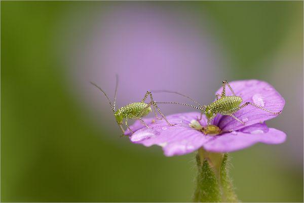 Hau ab von meiner Blüte!!