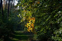 Hauch vom Herbst
