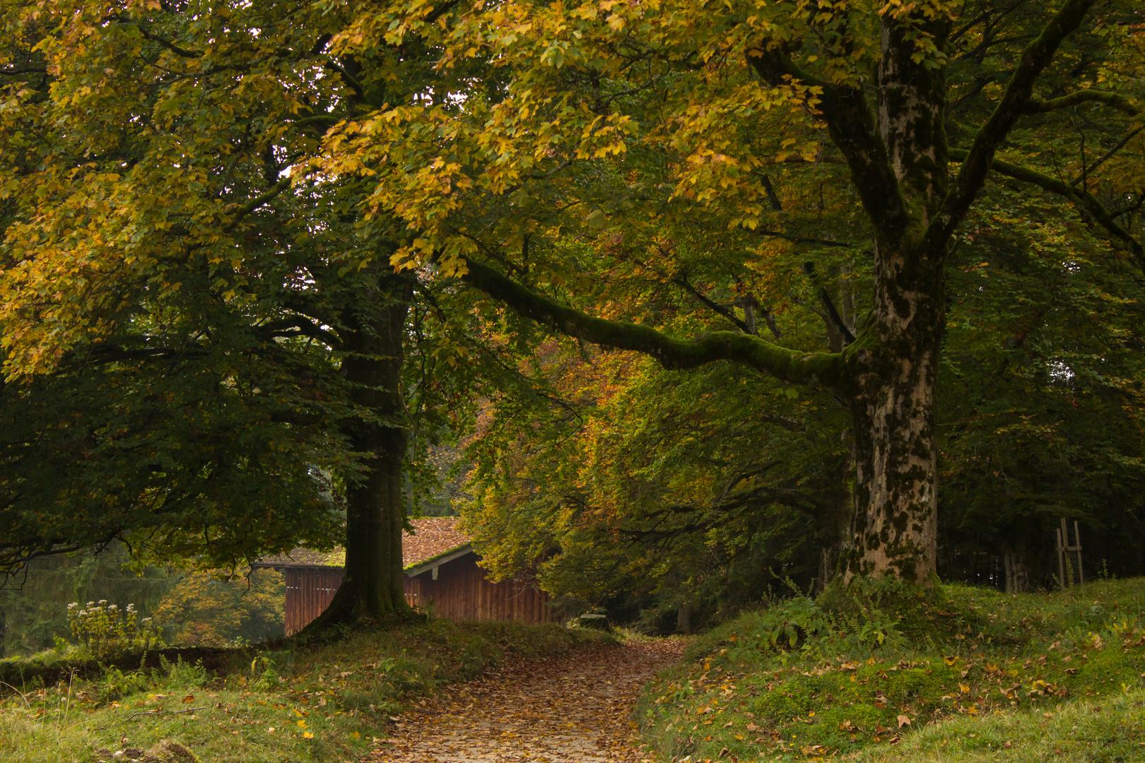Haus unter den Bäumen.