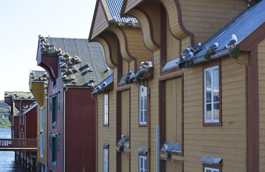 Hausbesetzer in Roervik