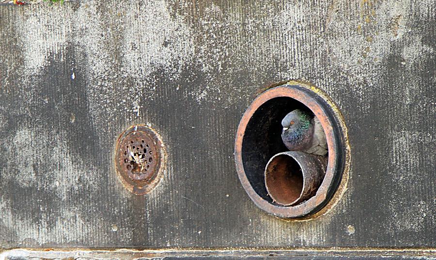 Hausbesetzung in der Taubenwelt