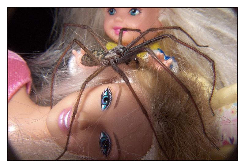 Hausbewohner VII - Besuch im Puppenhaus