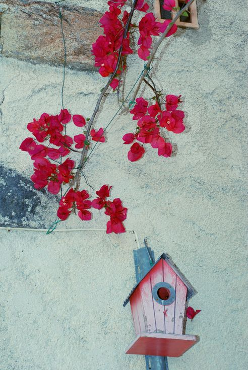Hauswand provencal