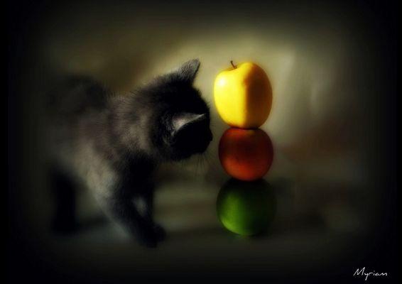 Haut comme 3 pommes...