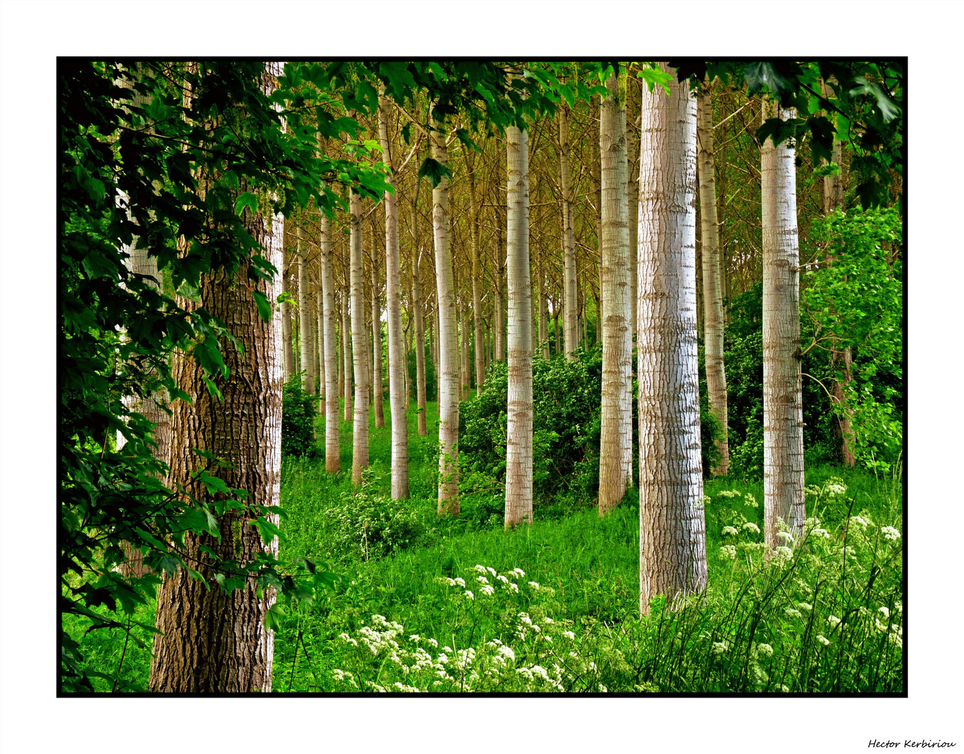 haute futaie photo et image arbres nature images