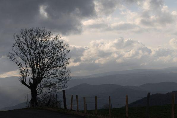 haute loire arbre dans la brume