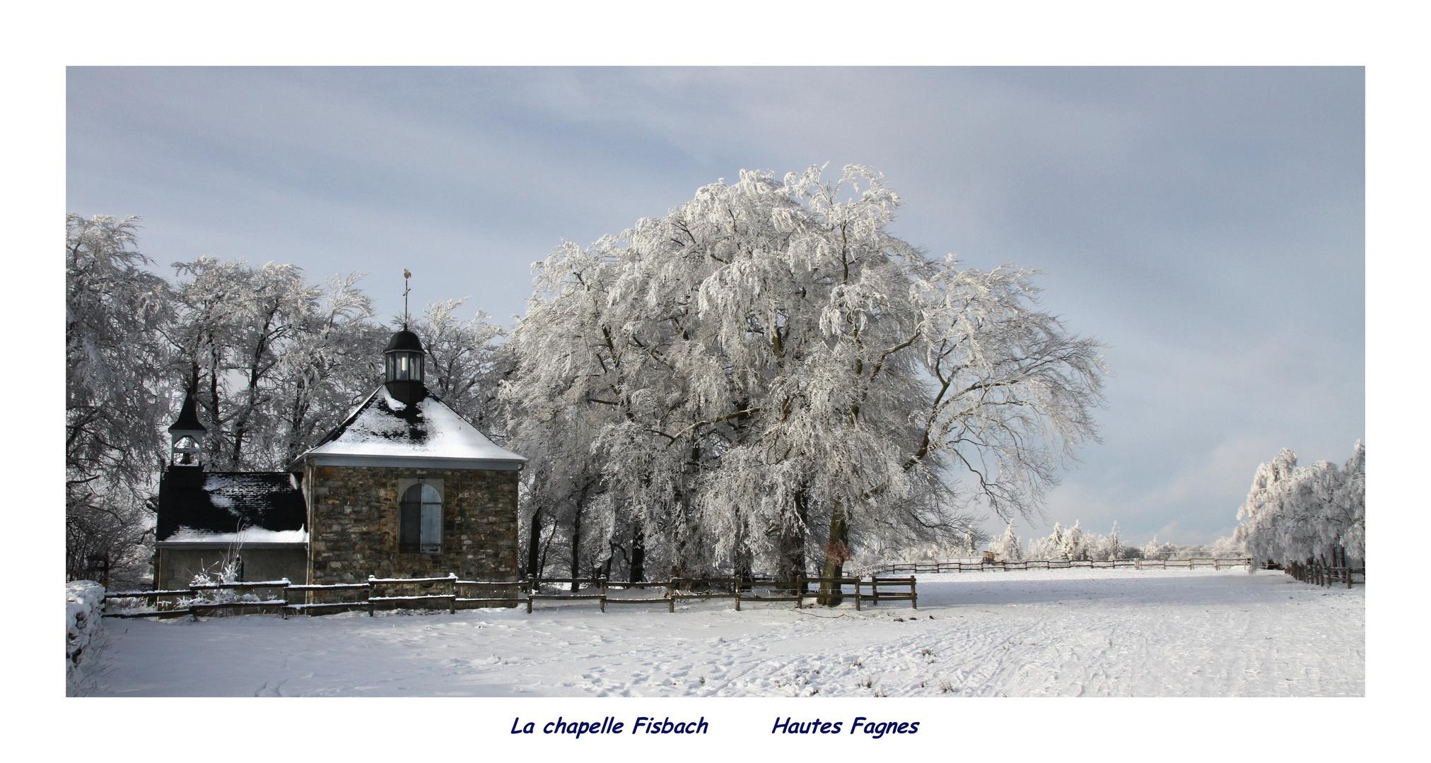 Hautes Fagnes Haute Belgique