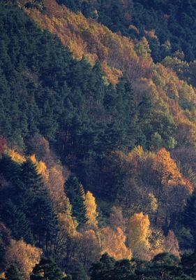 Hauteur des forêts vosgiennes