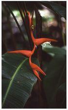 Hawaii Blumeninsel 3