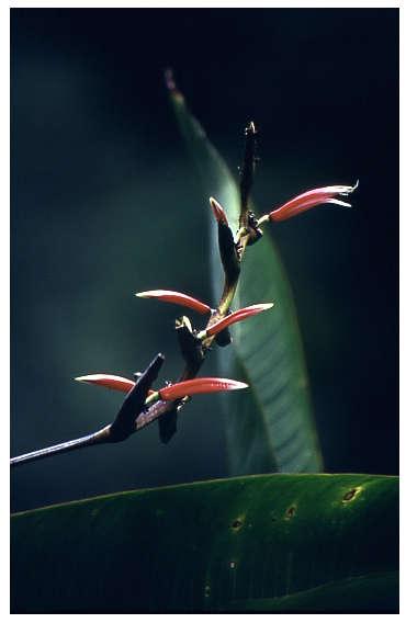 Hawaii Blumeninsel2