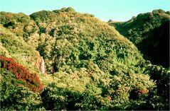 Hawaiianischer Regenwald
