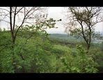 Hawkwood Rainforest