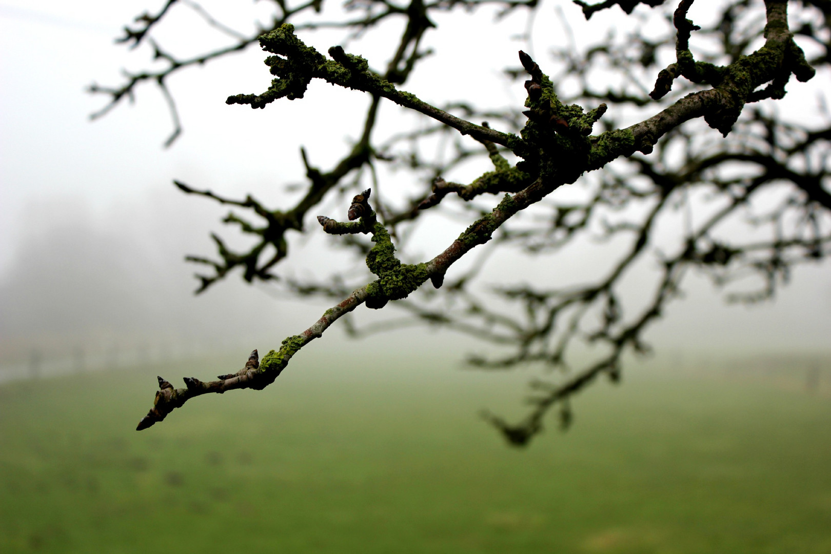 haze on the meadow
