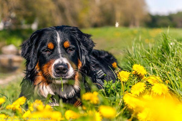 Hazel genießt die Frühlingssonne