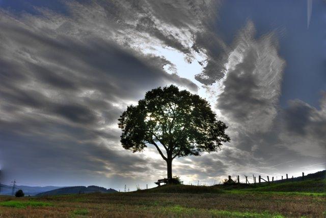 HDR Baum
