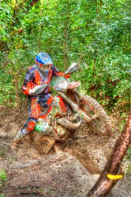HDR bestiole sortie des bois