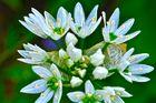 HDR Blume