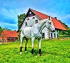 HDR Pferd